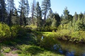 SAGEHEN CREEK to Stampede Reservoir | TAHOE FLOWER HIKES