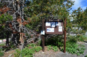 Trail head to Ward Creek