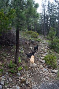 TRTrail to Paige Meadows
