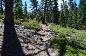 Trail Montane Zone