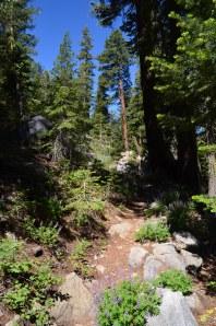Trail Understory