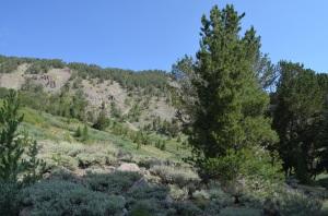 Upper Montane